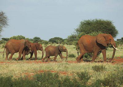 Elephants in Lake Manyara NP