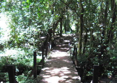 Kilimanjaro - Rain forest