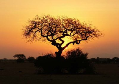 Sunset in Tarangire National Park